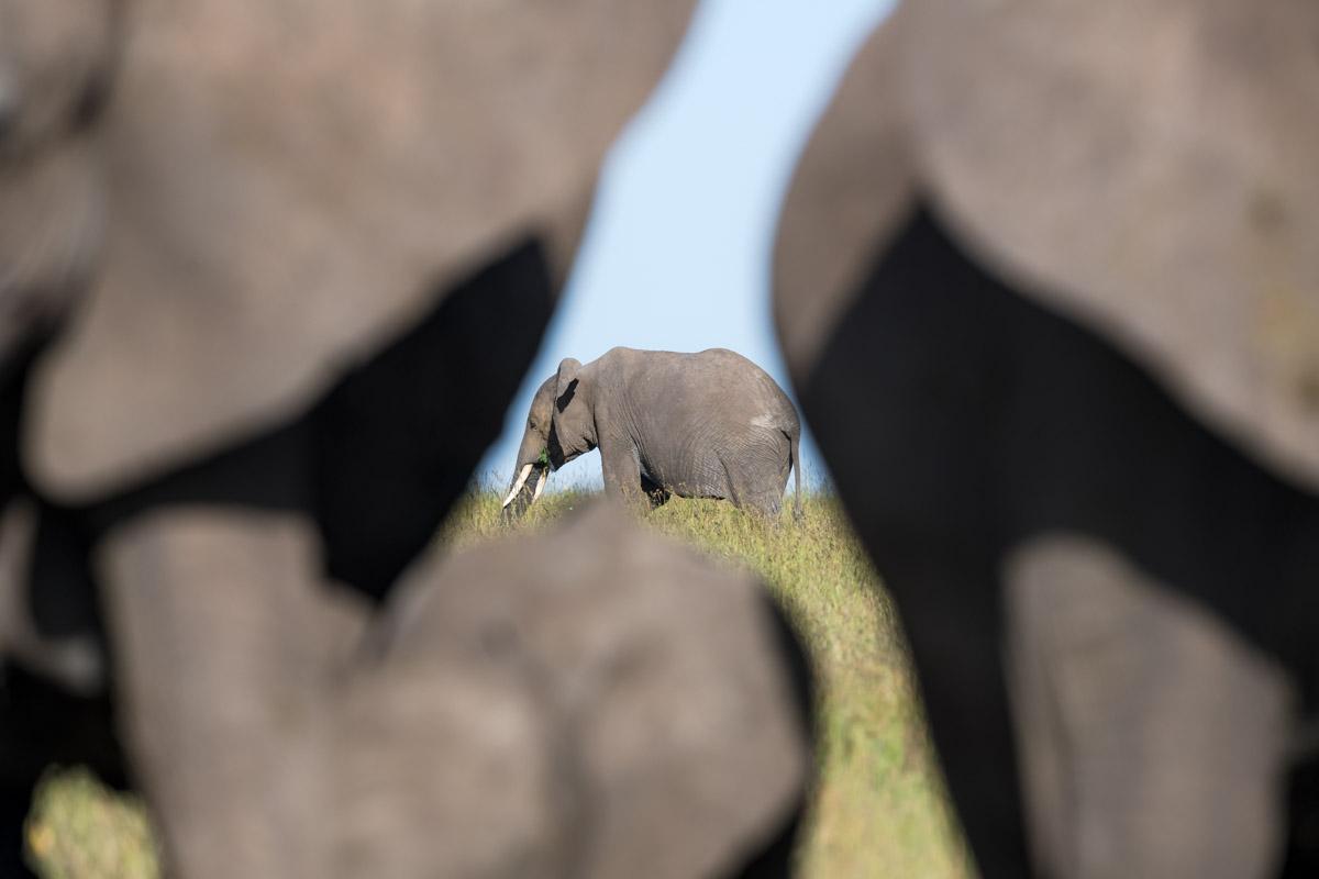 Elephant Window