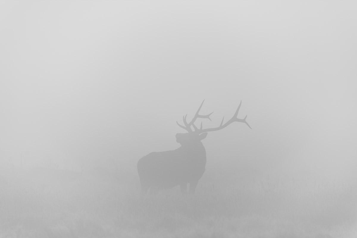 Posing in the Fog