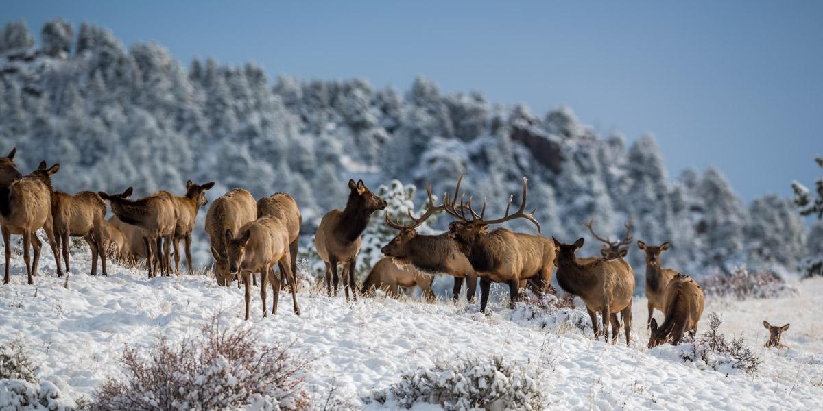 Snowy Standoff