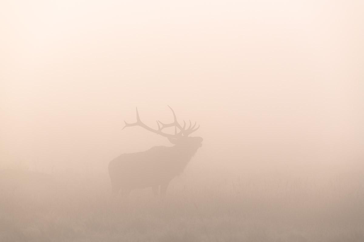Screaming In the Fog