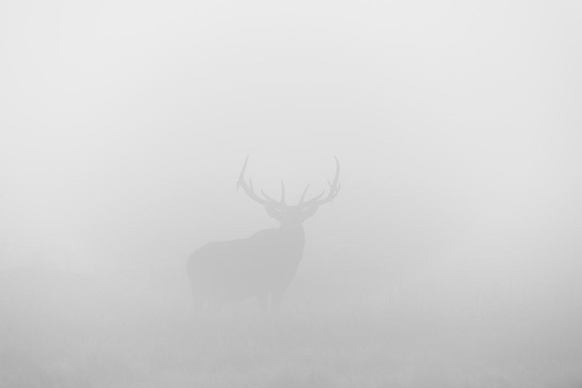 Stare Down in the Fog